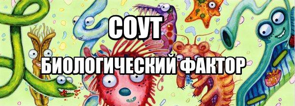 Особенности Оценки Биологического Фактора При Проведении СОУТ!